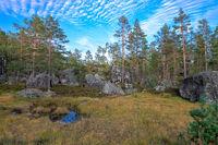 Im Wald der Findlinge