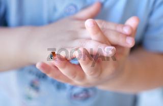 Marienkäfer auf Kinderhand