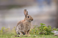 Rabbit sitting in the grass outdoors