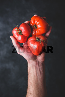 Hand holding fresh red tomatoes