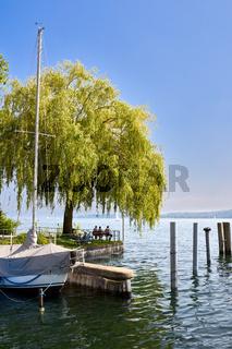 Ein Baum am Überlinger Mantelhafen