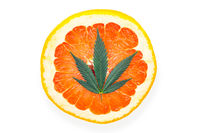 Single Cannabis leaf on Red grapefruit citrus terpenes concept