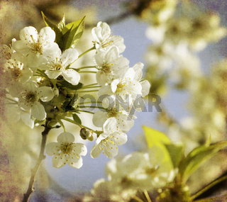 baumblüte frühling retro