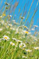 Bunte Blumenwiese, Hochformat