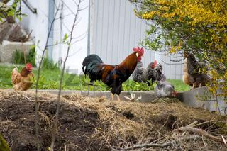Scene from A Farm