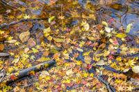 autumn leaves closeup on the lake