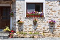Schöne Blumen im Fenster