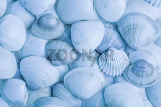 Collection of seashells as background in blue tone. Su