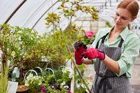 Floristin bei der Pflege von Blumen und Pflanzen