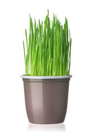Fresh green grass in plastic cup