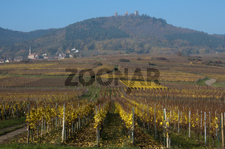drei Burgen in Husseren, Elsass