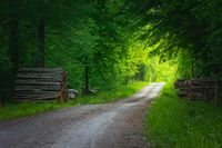 Gravel road through green forest and sunlight