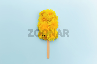 Flat lay on blue background with dandelion blossom ice cream lolly on a stick