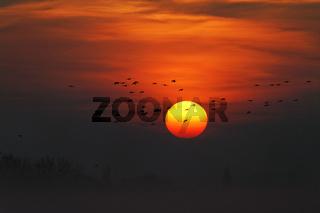 Vögel fliegen vor der untergehenden Sonne.