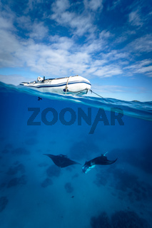 Two Manta rays dancing below a boat in the crystal clear water