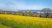 Rapsfeld bei Überlingen am Bodensee