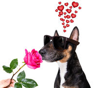 dog valentines love heart mothers and fathers day