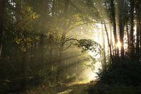 Misty forest during sunrise