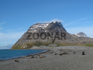 Possession Bay, Südgeorgien