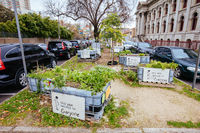 Condell Growers and Sharers Community Garden