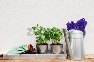 Gardening concept with equipment, hyacinth flowers and seedlings