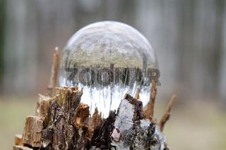 Birkenwald in einer Glaskugel