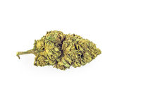Medical Cannabis flower bud isolated on white background
