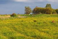 Wiesenlandschaft im Frühling
