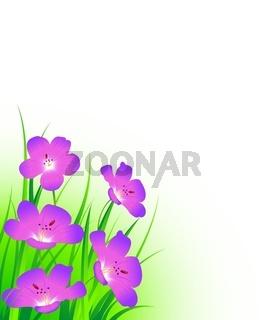 Storchschnabelblüten