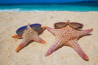 Starfish with sunglasses on beach