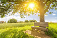 Cosy wooden bench under a tree in idyllic rural landscape with sun shining trough the leaves in spring