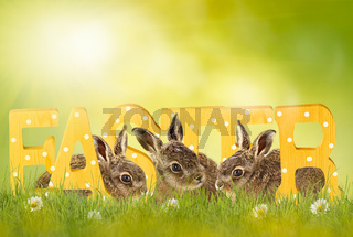 Happy Easter; easter bunny