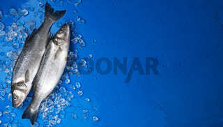 Seabass fish on ice on blue color background, top view