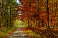 A long road through a colorful autumn forest