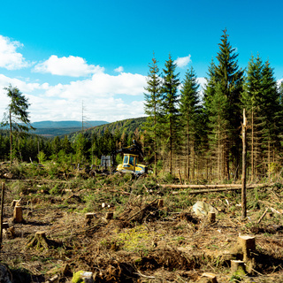 Ecological disaster in the Harz Mountains
