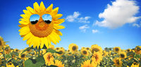 Funny sunflower with sunglasses on a blue sky