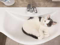 Funny cat in bathtub sink