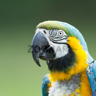Close-up of a macaw parrot