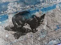 schwarze Katze auf Schiffsrumpf