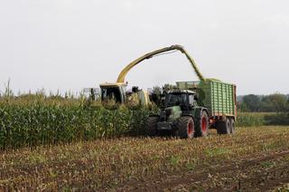 Maisernte für Biogas und Futtermittel