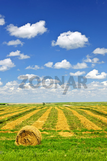 Wheat farm field at harvest