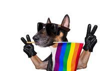 gay pride dog