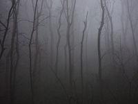 Woods, trees, trunks, fog