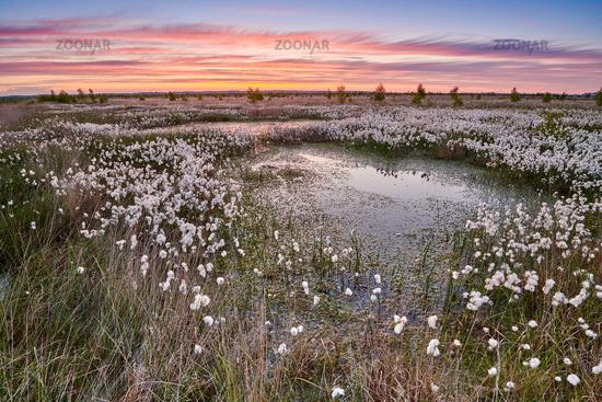 Rehdener Geestmoor bei Sonnenaufgang