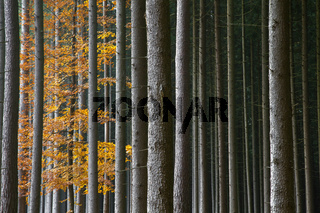 Farbenfroher Herbstwald in Bayern