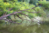 Tree and branches in the water of a lake