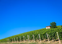 Piedmont hills in Italy with scenic countryside, vineyard field and blue sky
