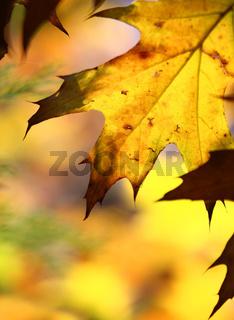 fall tree leaf background