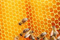 Honigwaben und Bienen