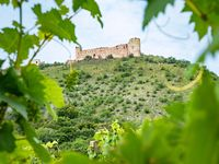 Vine leaves and vineyards with castle Devicky in background.